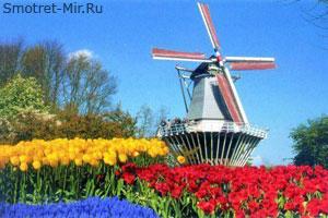 Нидерланды - мельница в тюльпанах