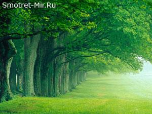 Растительный покров Европы