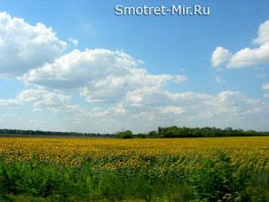 Степная зона Украины