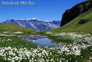 Альпийская растительность