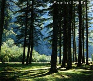 Зона смешанных лесов Украины