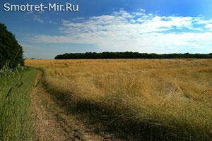 Зона степей Украины