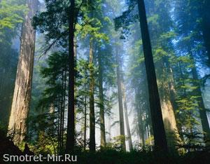 Леса Европы