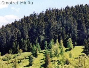 Леса Украины