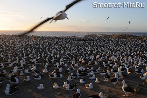 Птицы Франции