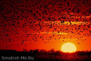 Сезонные миграции птиц