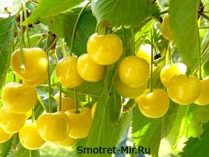 Фото растительности