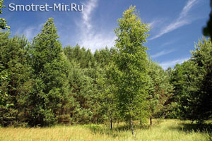Леса Полесья