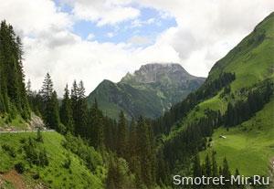 Леса в Альпах