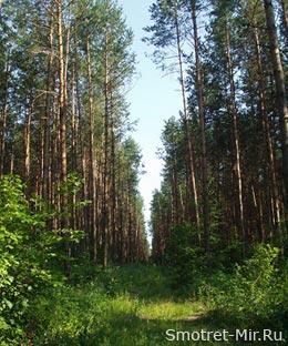 Лес во Франции