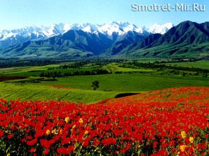 Альпийские луга фото