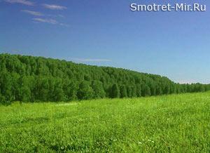Днестровская лесостепь
