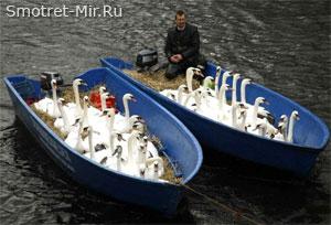 Забота о птицах Швеции