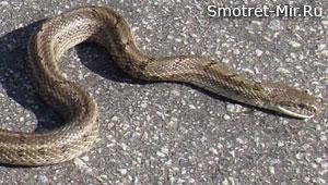 Змеи Европы