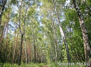 Леса Европы фото