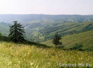 Почвы лесостепи