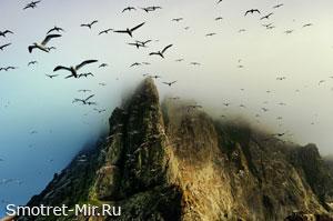 Остров птиц Сент-Килда