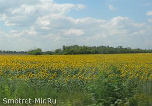 Степи Украины