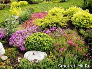 Альпийские растения фото