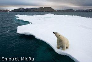 Арктические животные