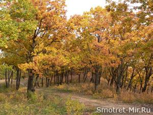 Деревья смешанного леса