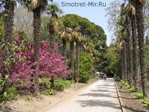 Крымские растения