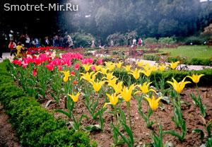 Крым Никитский сад