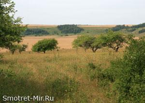Лесостепь Украины