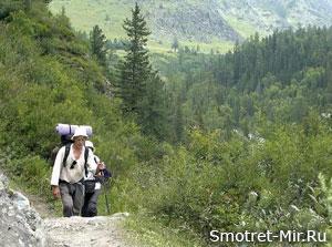 Отдых Крым в лесу