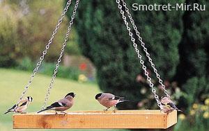Птицы Англии