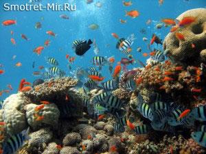 Cрединно-океанические хребты