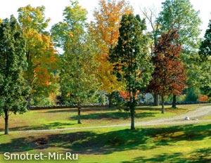 Деревья лиственного леса