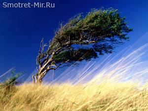 Почему дует ветер