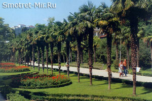 Растения Крыма фото