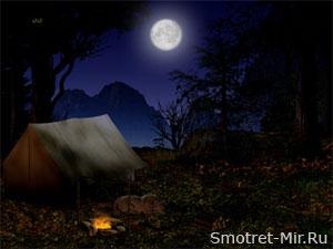 Ночь лес луна