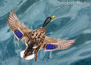 Птицы озер