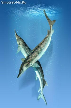 Рыба в Азовском море