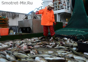 Рыба Норвегии