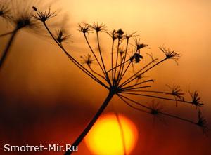 Солнечные факелы