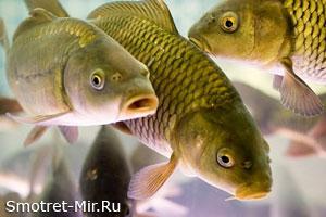 Время нереста рыбы