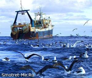 Добыча рыбы в Исландии