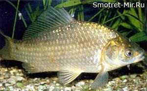 Период нереста рыб