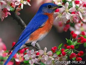 Прилет птиц весной