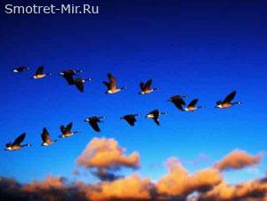 Прилет птиц