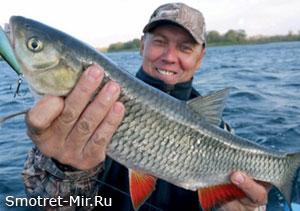 Рыбы Амурской области