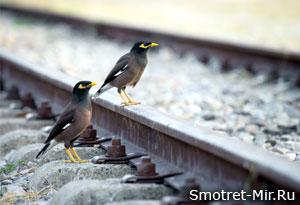 Фото птиц России