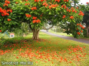 Фото цветение деревьев