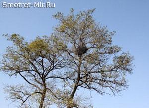 Гнездо на дереве