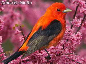 Голоса весенних птиц