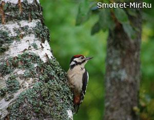 Пение птиц весной